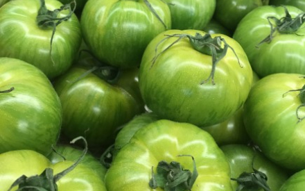 TOMATE GREEN ZEBREE France cat 1