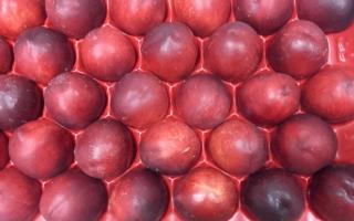 BRUGNON JAUNE cat 1 au COLIS 4.03kg x 2.85€