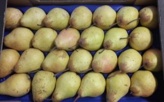 POIRE ROCHA colis 5.06kg x 1.88€