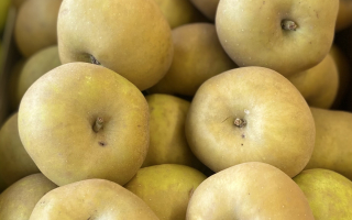 POMME canada grise France cal 150 cat 1