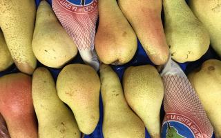 POIRE ABATE Italie  au colis 3.75kg x 2.66€